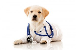 veterinary-trips-and-assistance