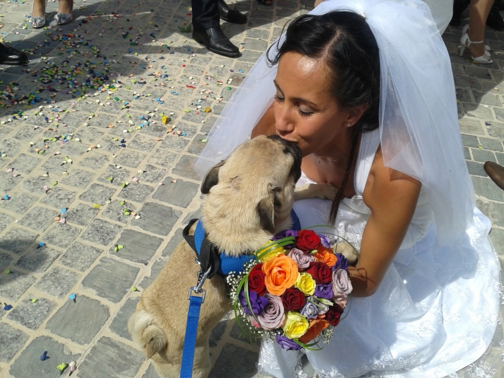 pet sitting malta dogs at weddings