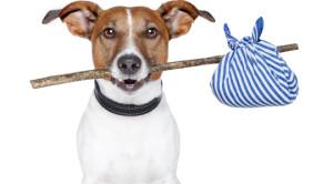 pet-relocation-to-malta