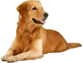pet-sitting-malta-big-dog-boarding-booking
