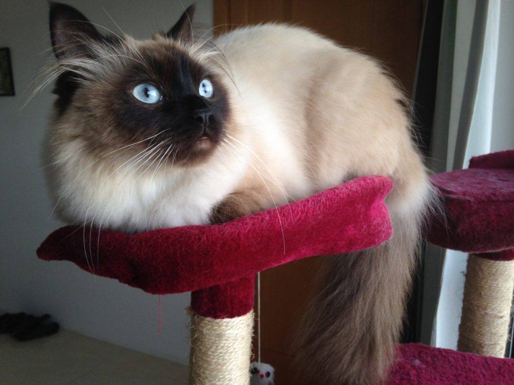 cat home visits