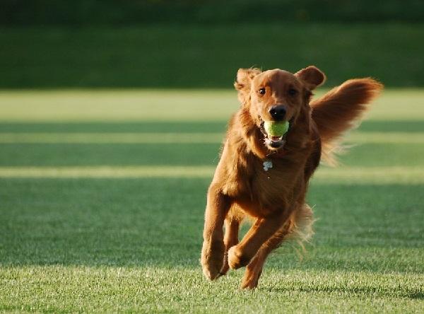 Raising a Balanced Dog