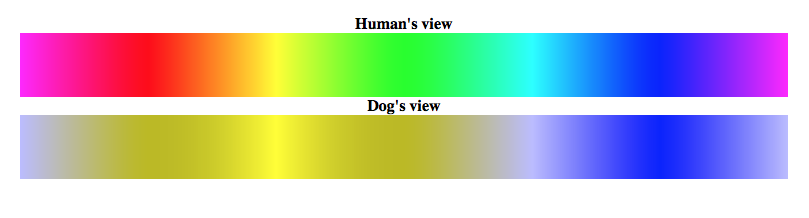 Dog vision compared to human vision