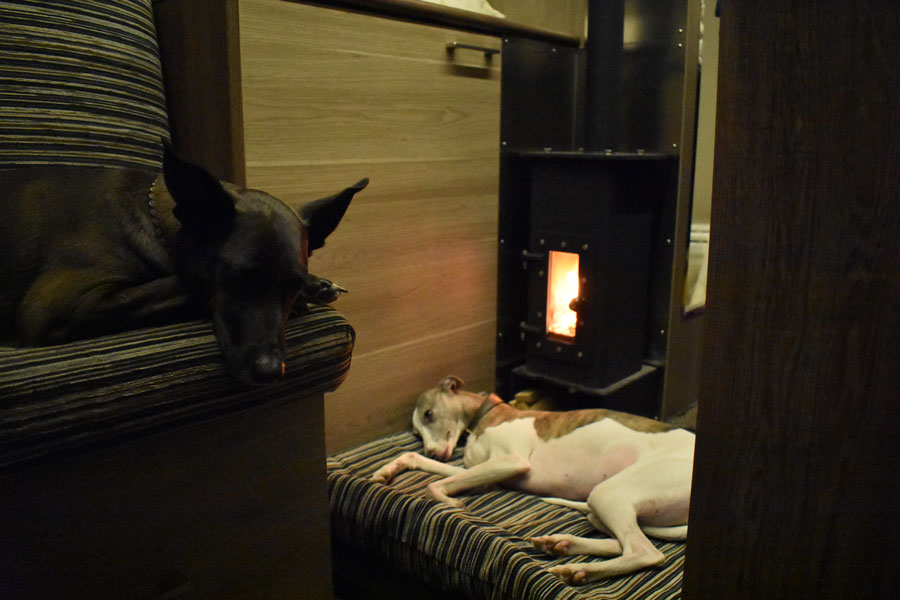 dogs-heating-stove