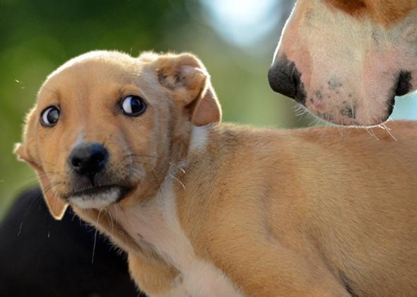 Understanding dogs pet sitting malta stressed dog